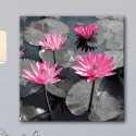 Tableau Fleurs de Lotus Rose