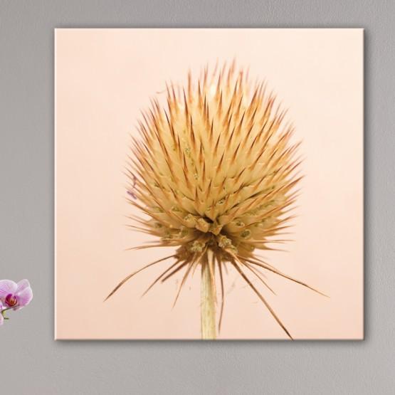 Tableau Nature Fleur Ronde